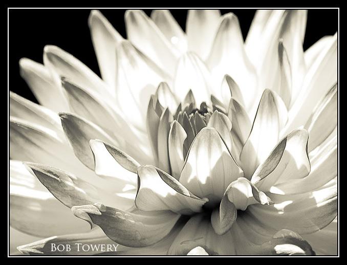 Flower-5995