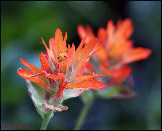 Flowers-1295