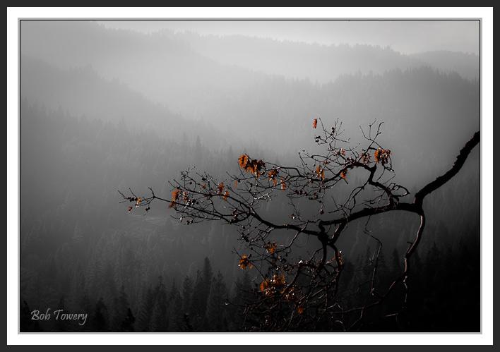 Fall-30954