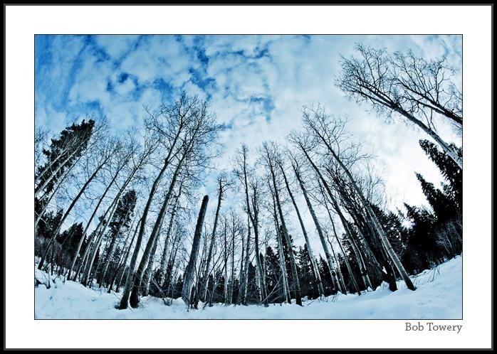 Snow-0381