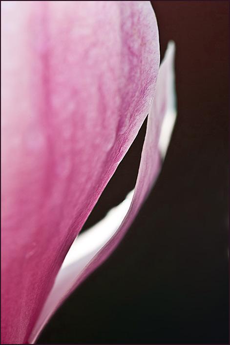 Tulip-0744