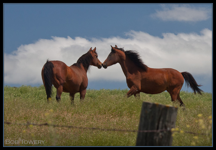 Horse-7676