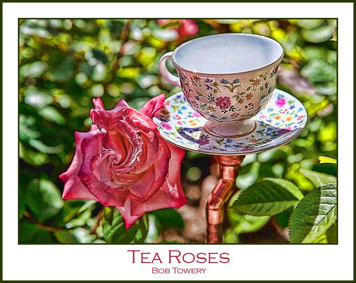 Tea-3679-2
