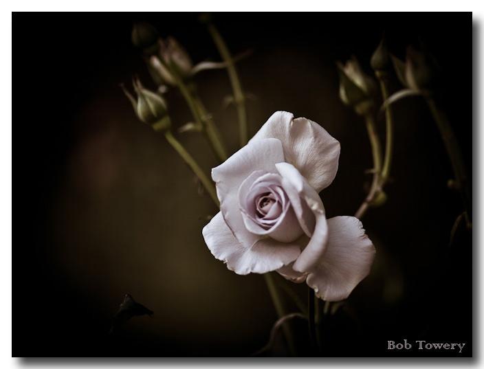 Flower-1551