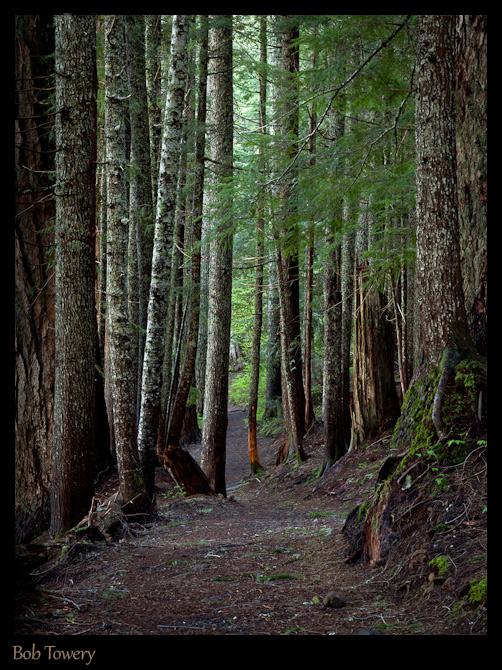 Tree-6544-2