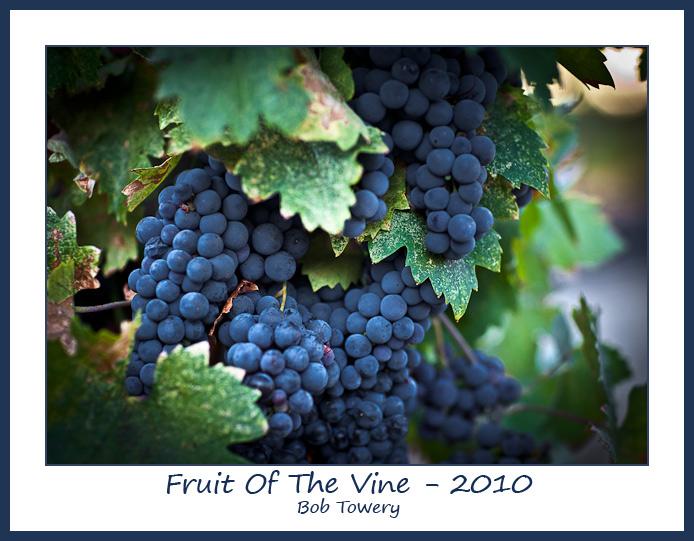 Grapes-5442