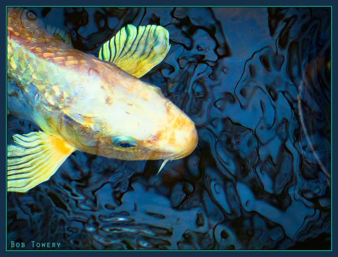 Fishtopazcolorblast5400-