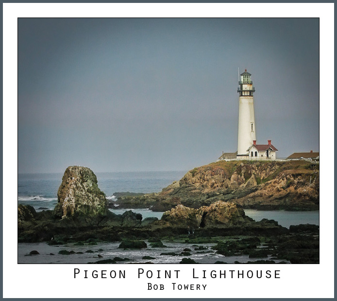 Pigeon-