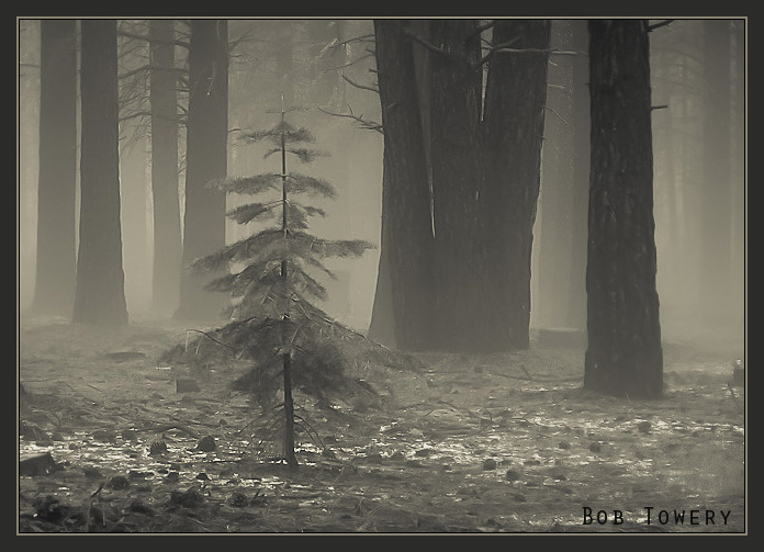 Snowtree-5065