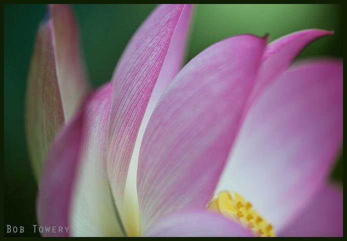 Flowermacro-1359