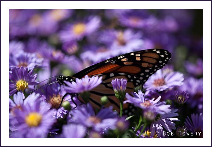 Butterfly-5724