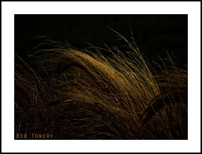 Grain-1000921