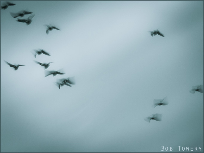 Dianesbirds-1010391