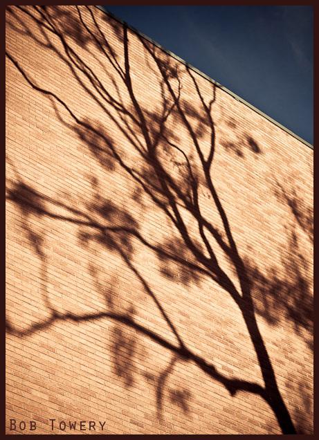 Shadowtree-9448