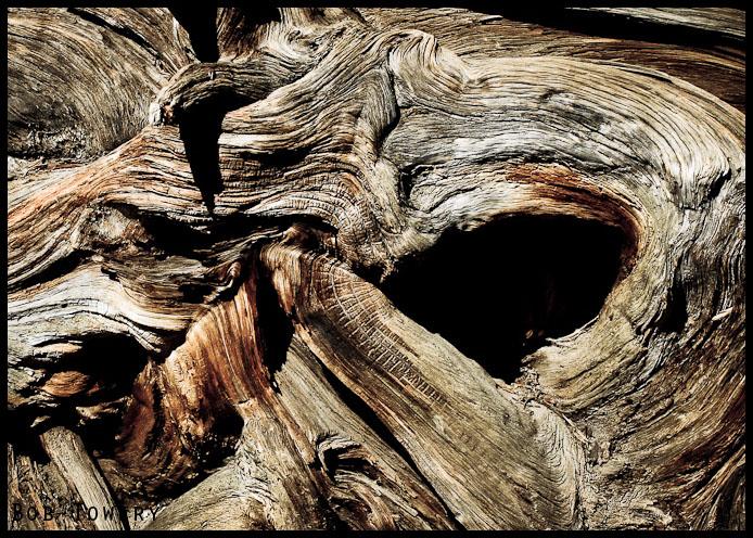 Tree-1381