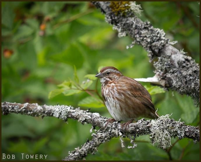 Bird-1010928