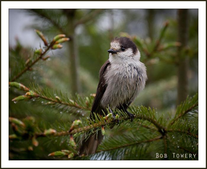 Bird-2625