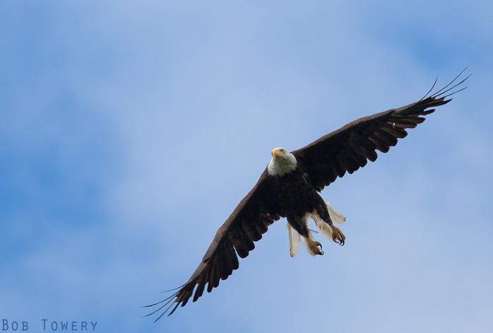 Eagle-7057-2
