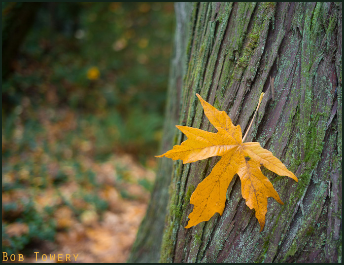 Wordlessyellowleaf-1033013