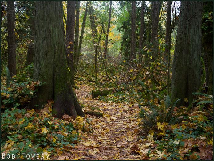 Forestpath-1033014