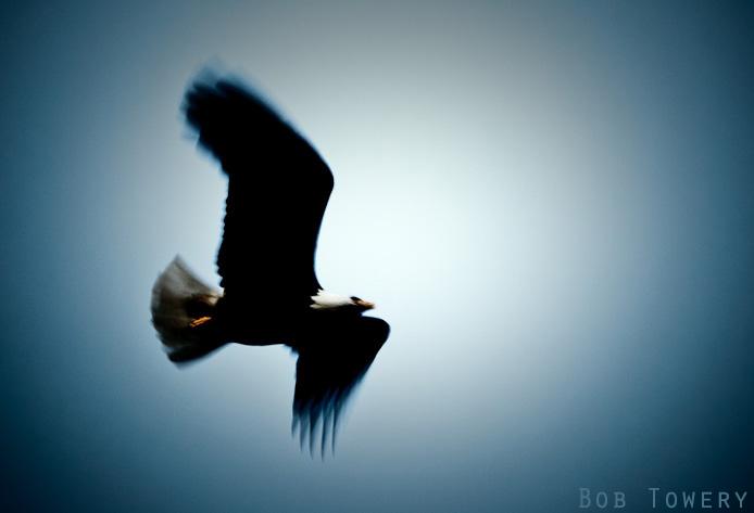 Eagle-0975