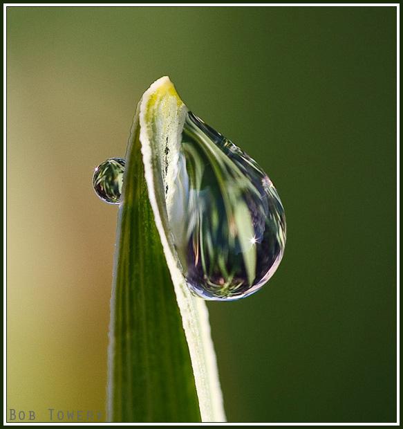 Waterdrop-