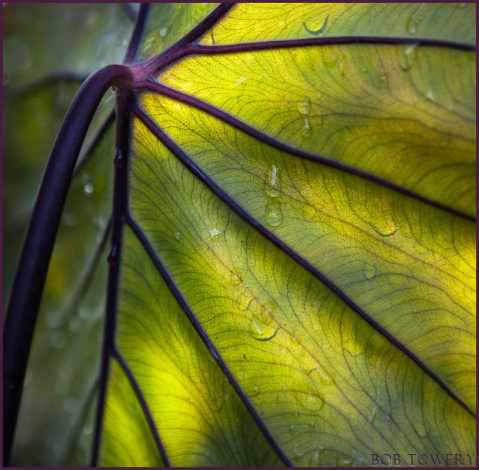 Plantback-4399
