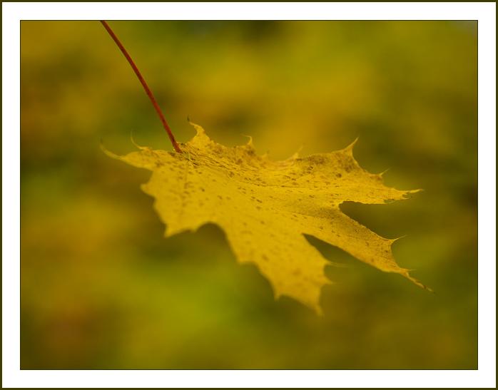 Fall-leaf-1042484