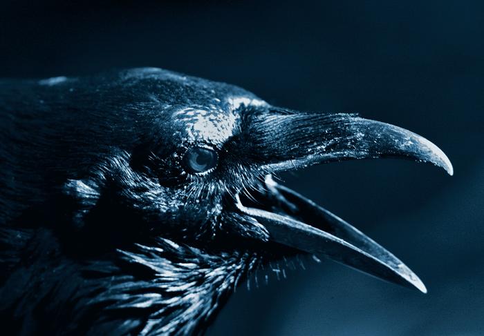 Raven-30808topaz