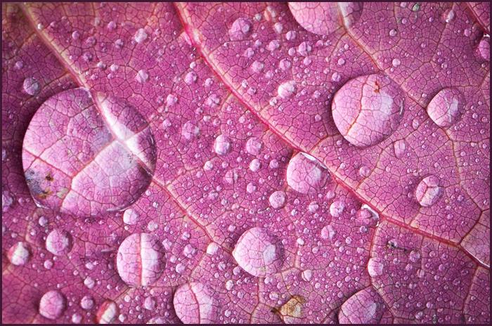 Leaf-4837