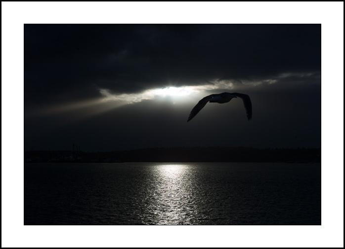 Gull-1033225