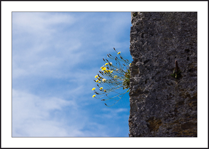 Nature-01855
