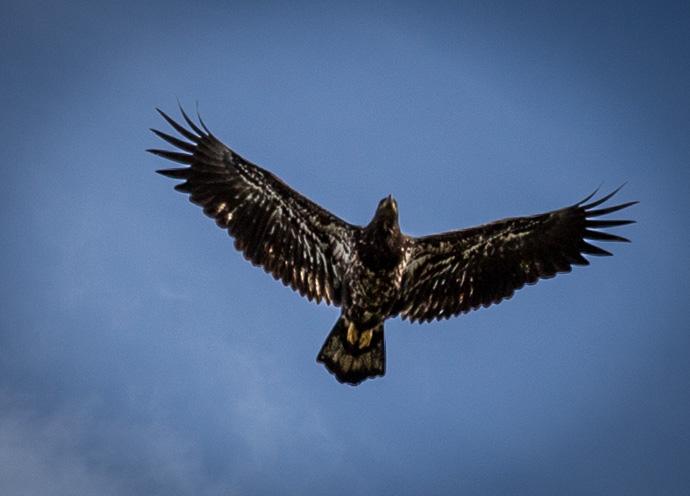 Eagle-0930