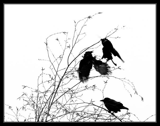 Birds-00400