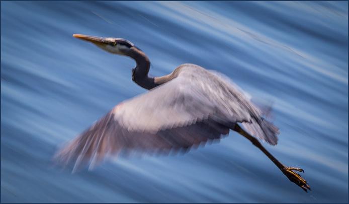 Heron-9922-2