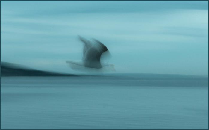 Gull-1032