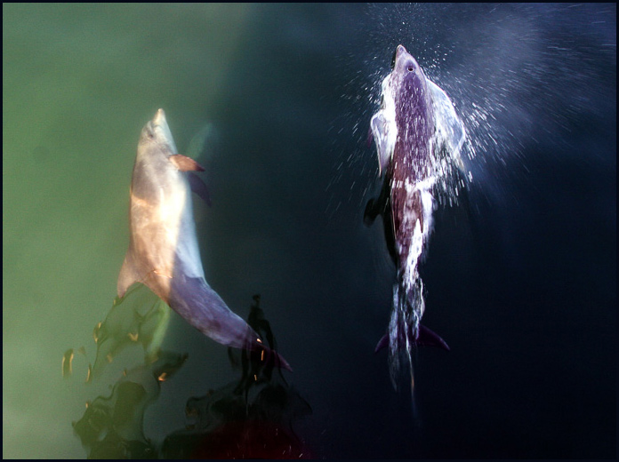 Dolphins-5652