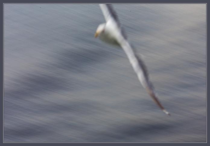 Gull-1021