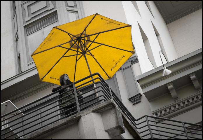 Umbrella-9387