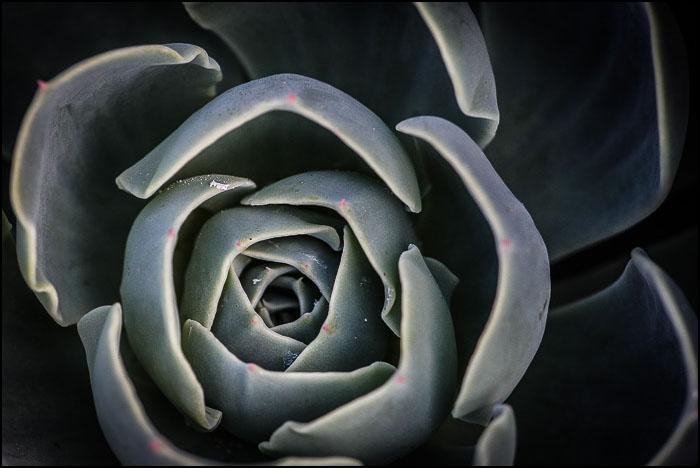 Iceplant-0518