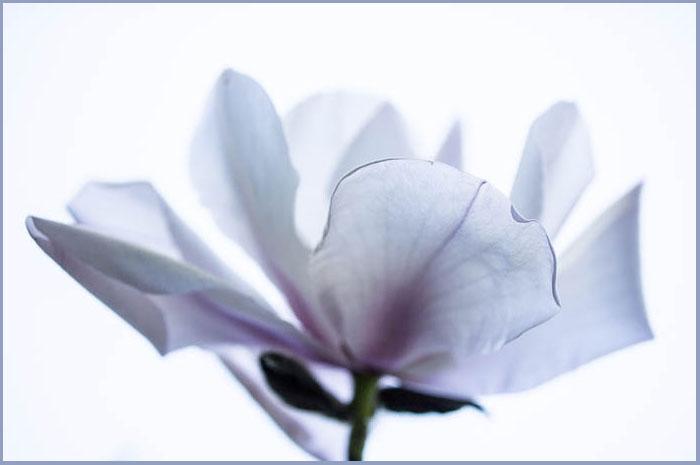 Flower-2326